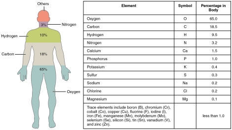201_Elements_of_the_Human_Body-01